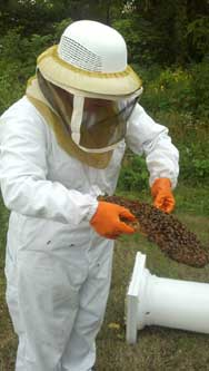 Remove Honey Bee Swarms on the Eastern Shore